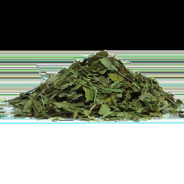 čaj z listů borůvek
