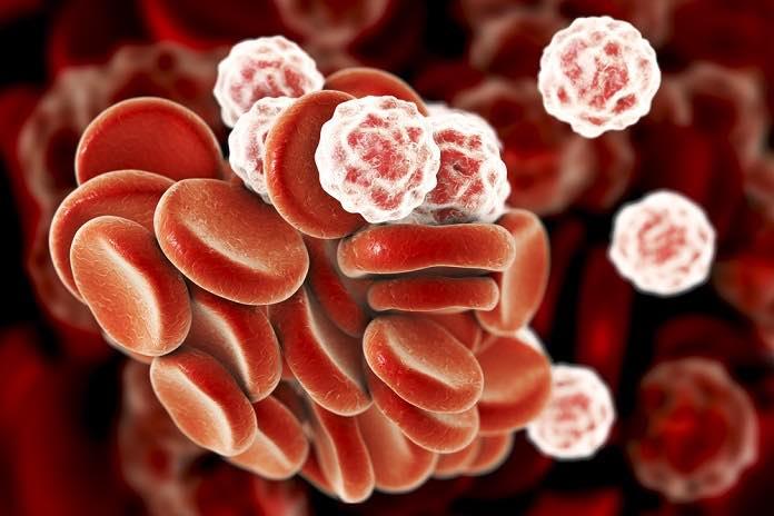 bílé krvinky