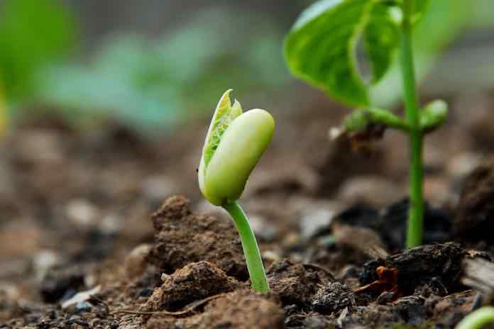 růst pozitivní afirmace
